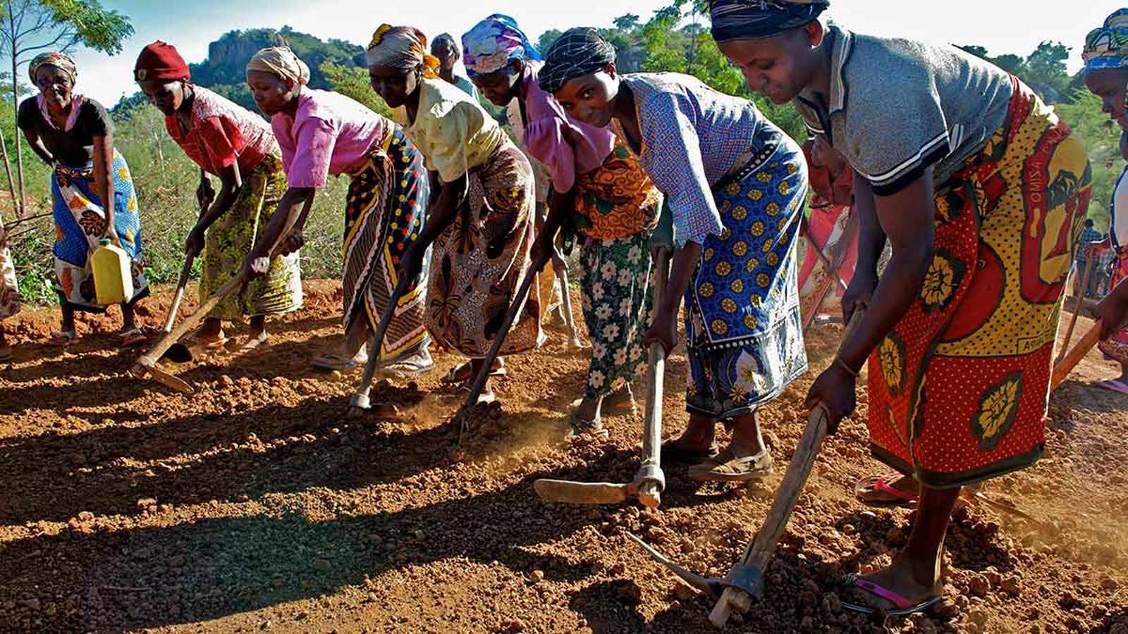 Women prepare the land.