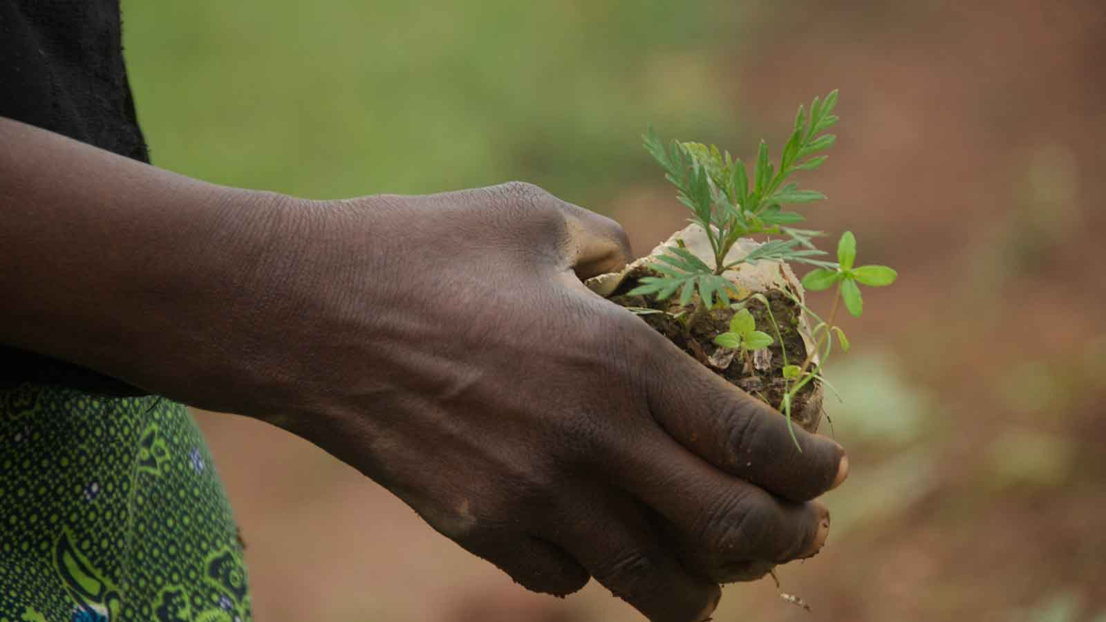 A child plants a tree in Kitui.