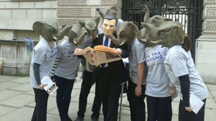 Elephants for the IF campaign