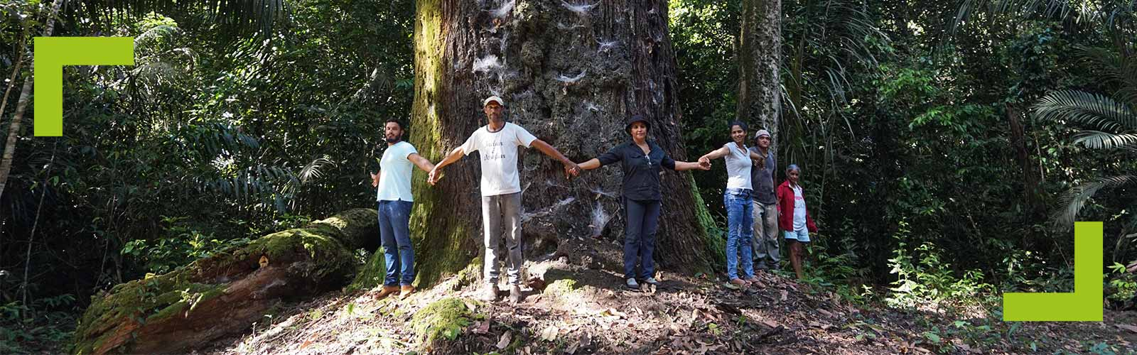 People holding hands around a large tree trunk.