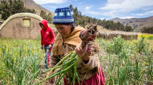 Nicanora harvesting onions in her garden in Bolivia