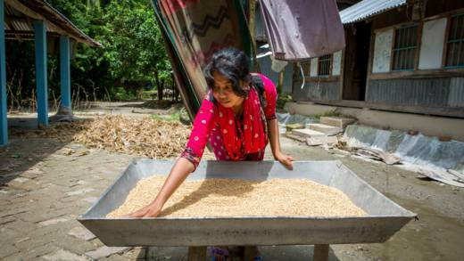 Sonia drying rice in a trough outside her home in Bangladesh