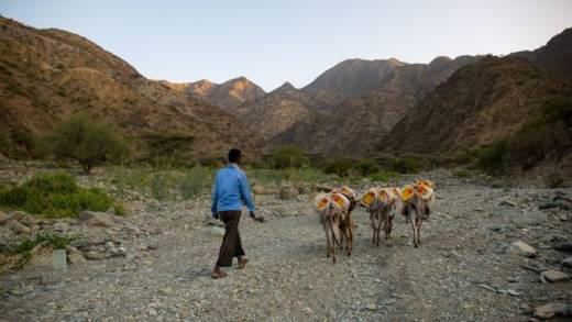 Man and donkeys carrying water cartons