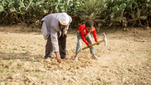 Abba Tesfalem bends down, as his young son uses a pick on the dry farmland
