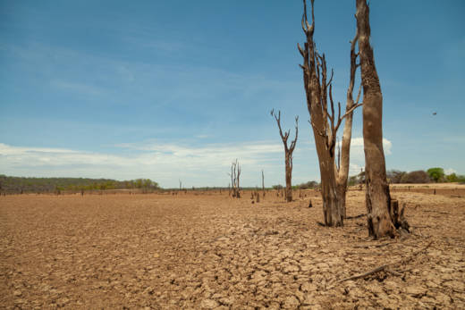A parched landscape in Zimbabwe's Binga district.