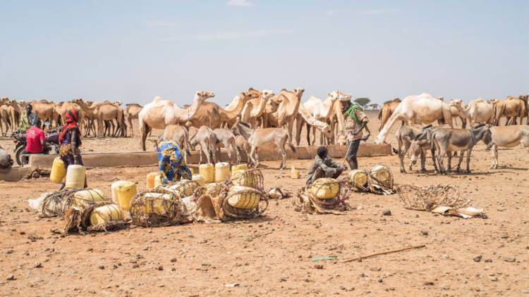 Drought in northern Kenya.