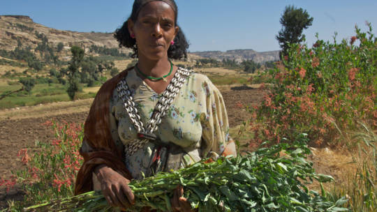 Alem Assefa with crops
