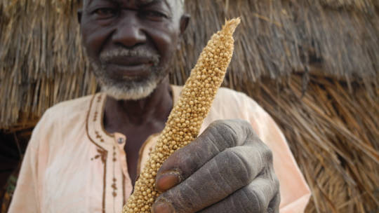 Hamani lives in the world's poorest country, Niger. Whenever he has a large harvest, he will share food with his neighbours. But times are hard and droughts have destroyed his crops.