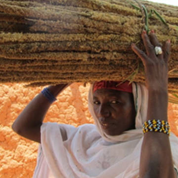 Woman carrying millet