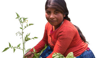 Rebeca harvesting crops in Bolivia.