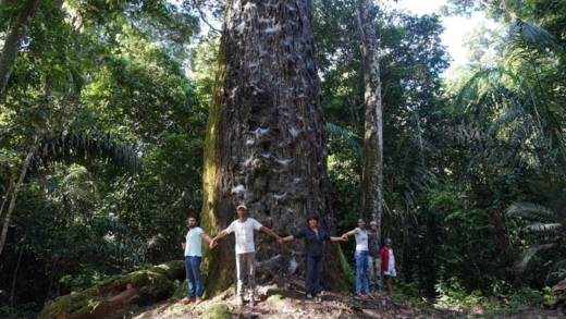 People standing round a tree in the Amazon rainforest