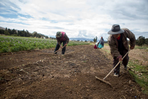 Planting seeds in Bolivia