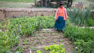 Cristina's vegetable garden in 2016. There are a large number of healthy green crops growing.
