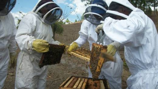 Rural women in Nicaragua are improving their income and self-esteem by learning to make and sell honey.