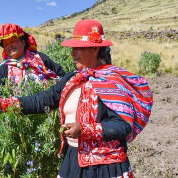 Rural communities in Peru are adapting to climate change and protecting their environment.