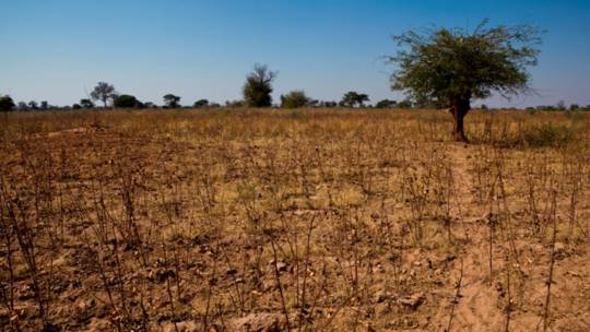 The dry and sparse environment in Marongero village, Zimbabwe.