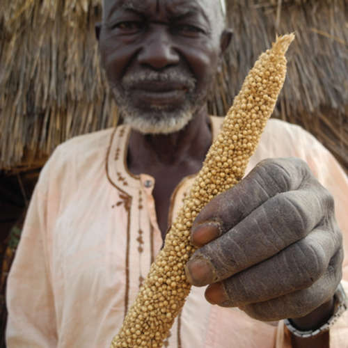 Please give what you can this Harvest to help people, like Hamani, who are struggling to feed their families.